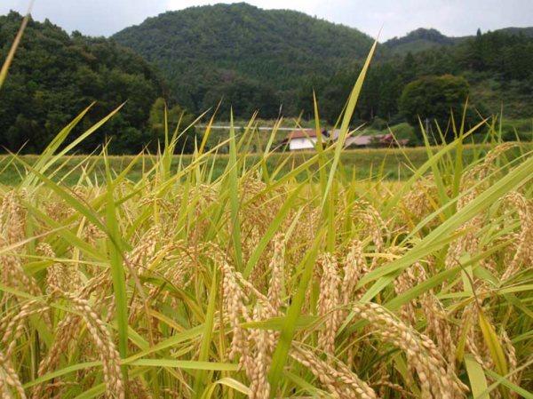 20091004-雲南1.jpg